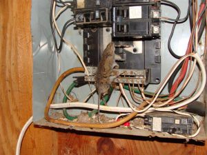 mouse-in-panel